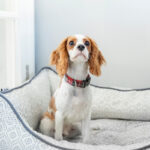 What should I do about my clingy dog after lockdown? Your pet queries answered