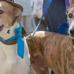 DogFest North to return to Tatton Park in Cheshire this summer