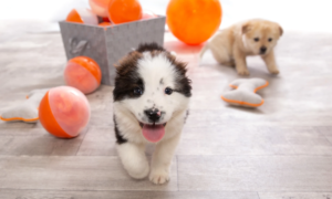 From Precious Puppy To Aggravating Adolescent: Advice to Make Your New Pandemic Pup a Fantastic Family Member | Living