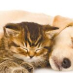 How to get your pets to play nice and get along together
