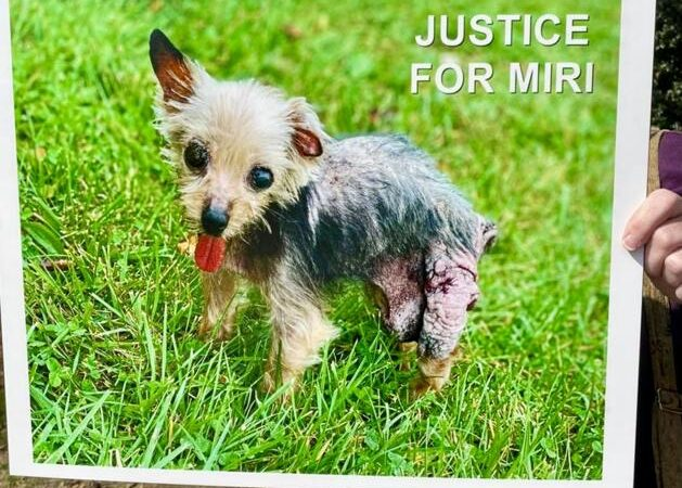 Local dog's tale one of abuse, neglect | Winchester Star